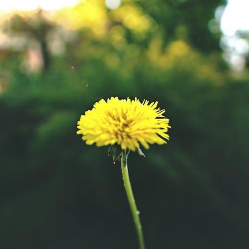 Бесплатное стоковое фото с желтый, композиция, легкий