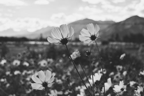 Grayscale Photo Of Flowers