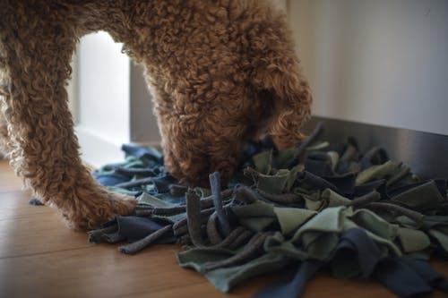 Fotos de stock gratuitas de acción, activación de alimentos, activación del perro