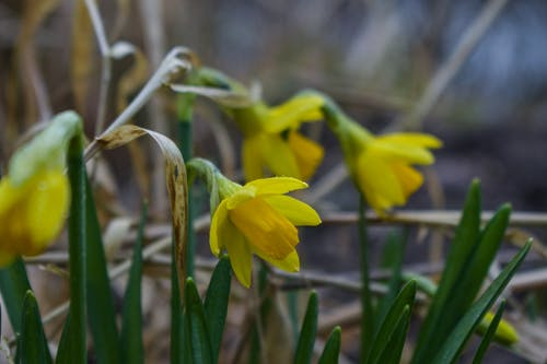 Fotos de stock gratuitas de abril, al aire libre, amarillo