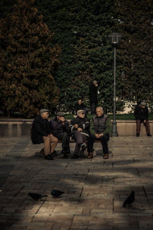 Foto stok gratis bangku, grup, kawan