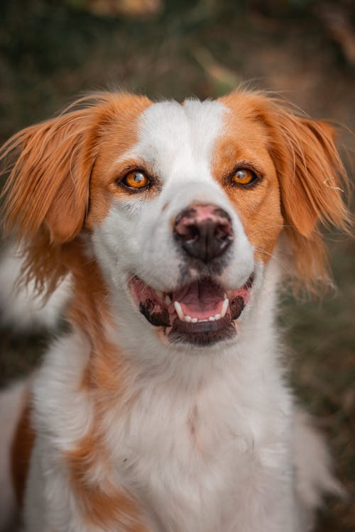 Photo Of A White And Brown Dog