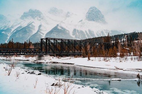 Безкоштовне стокове фото на тему «гора, гори, дерева, застуда»