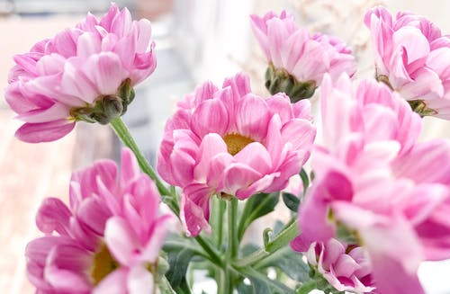 Pink Flowers In Close Up Photography
