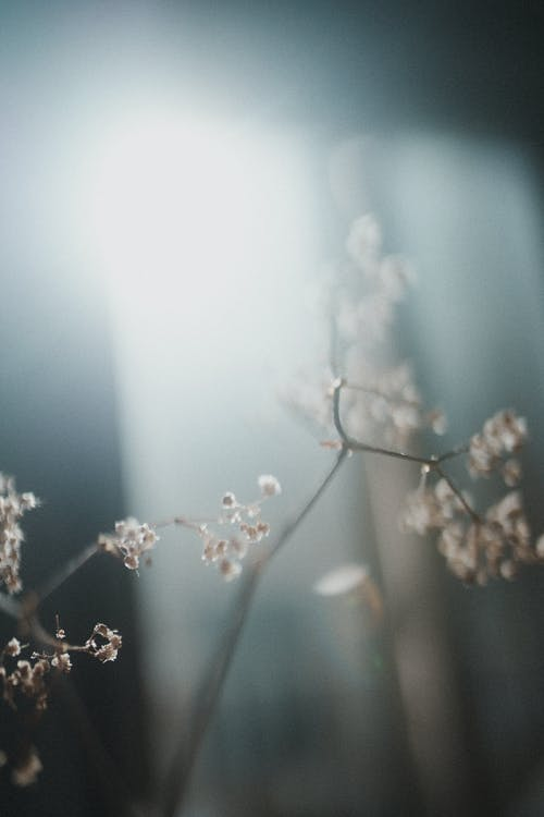 Blurry Picture of a Branch with Small Flowers
