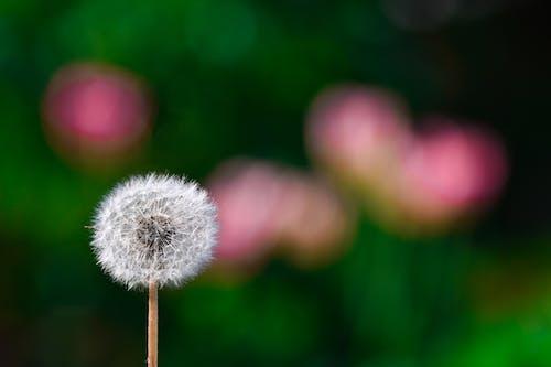 Fotos de stock gratuitas de al aire libre, alergia, azul