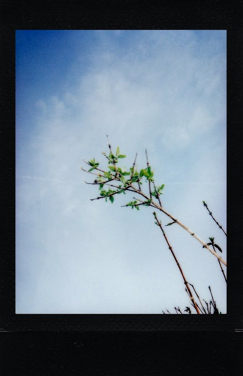 Green Tree Under White Clouds and Blue Sky