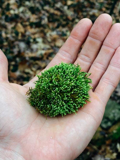 Grüne Pflanze Auf Personenhand