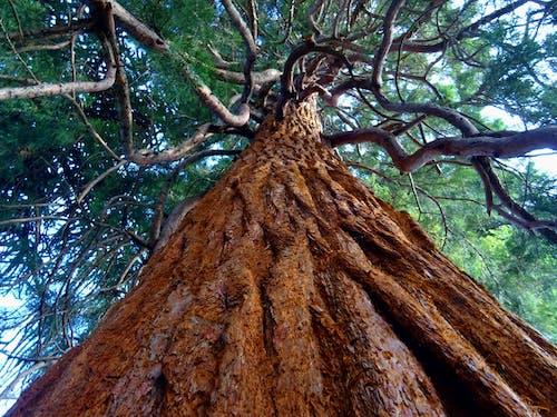 Fotobanka sbezplatnými fotkami na tému borovica, kmeň stromu, kôra stromu, krajina