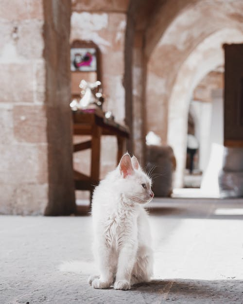 Photo Of A White Cat