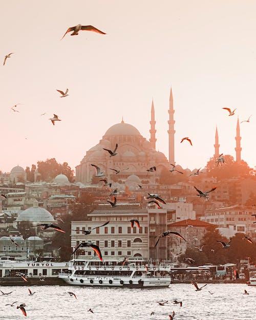 Immagine gratuita di alba, animali, architettura, città