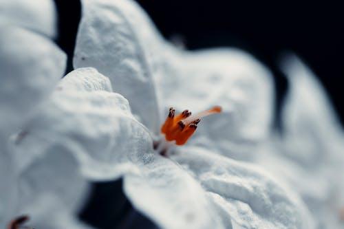おしべ, フローラ, 咲く, 工場の無料の写真素材