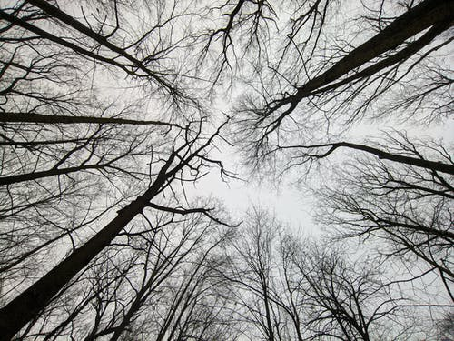 Free stock photo of trees forest