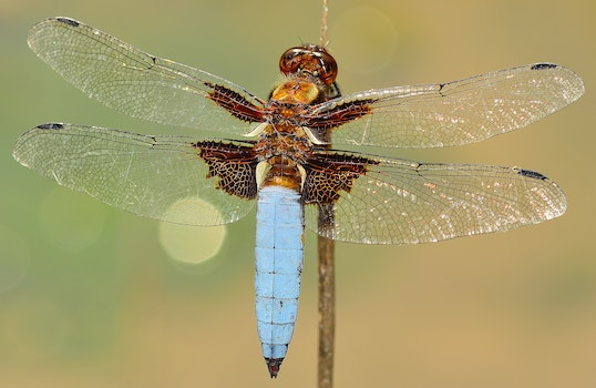 White and Brown Dragonfly on Stick