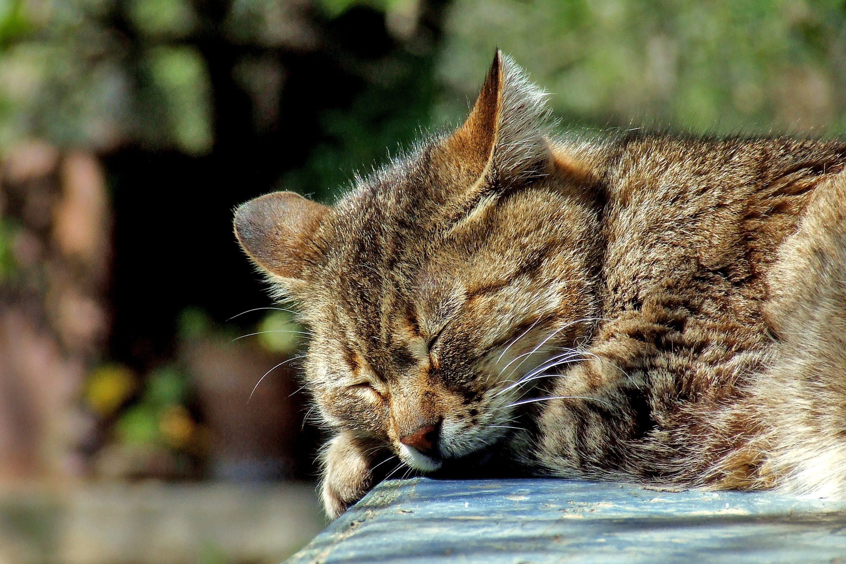 Brown Tabby Sleeping on Black Surface Outdoor