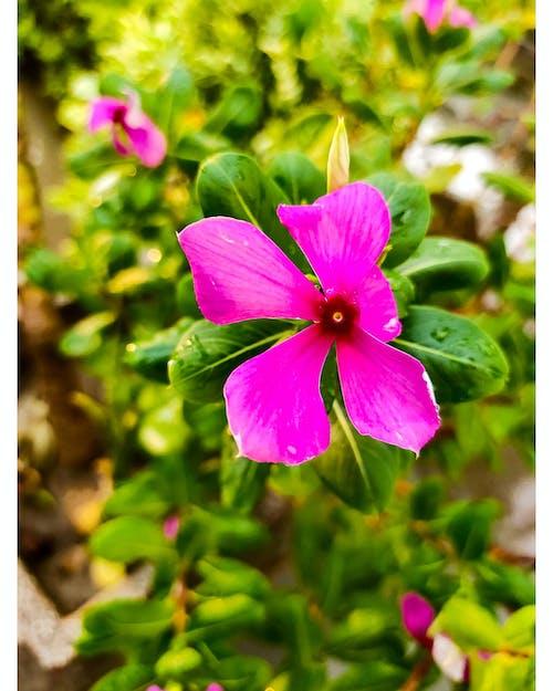 Free stock photo of #flower, #mobilechallenge, #outdoorchallenge, #pexels