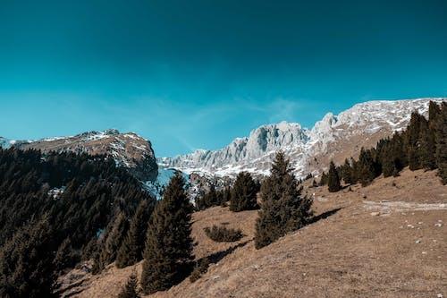 Groene Bomen In De Buurt Van Rocky Mountain Onder Blauwe Hemel