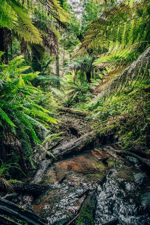 Foto d'estoc gratuïta de a l'aire lliure, arbres, boscos, corrent