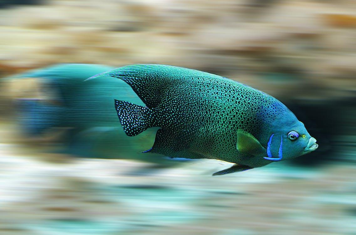 Pescado Azul Y Negro Durante El Día