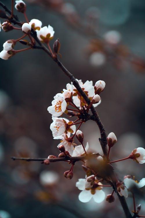 가지, 꽃, 꽃잎, 매크로의 무료 스톡 사진