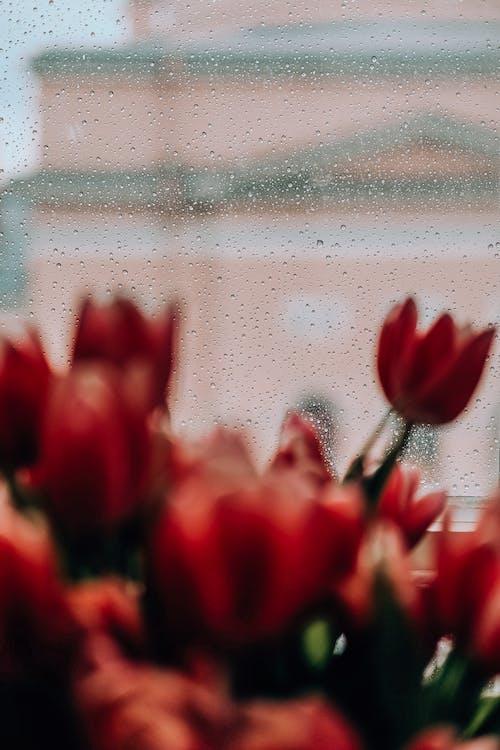 꽃, 꽃잎, 빗방울, 식물의 무료 스톡 사진