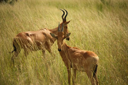 Animals On Grass Field