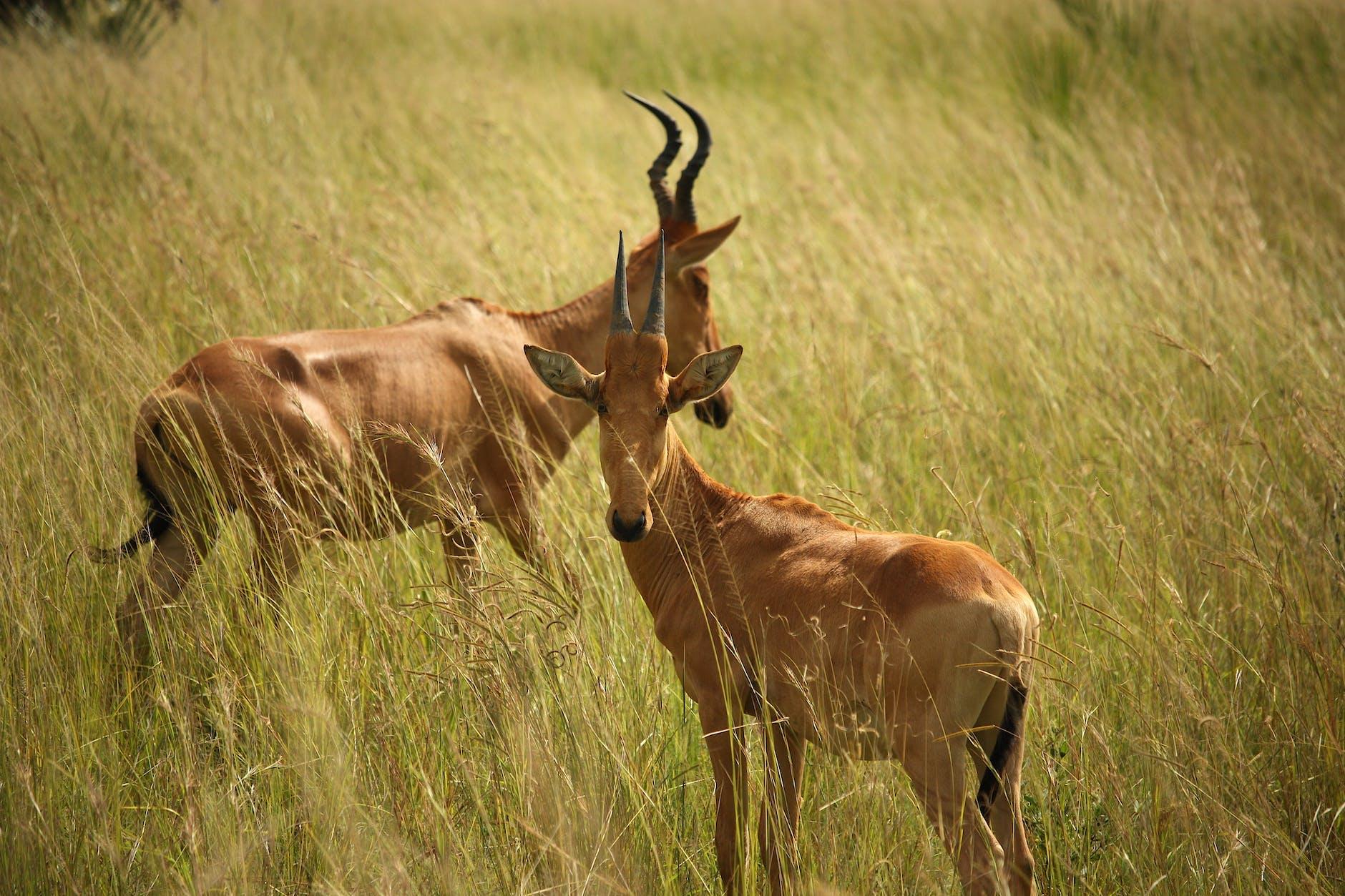 Interesting Info About Africa Wild Animals
