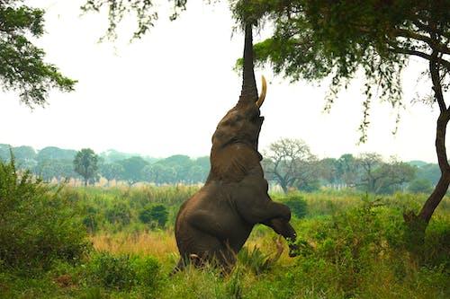 Fotos de stock gratuitas de animal, animal salvaje, árbol