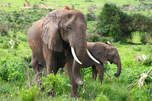 Brown Elephants On Green Grass Field