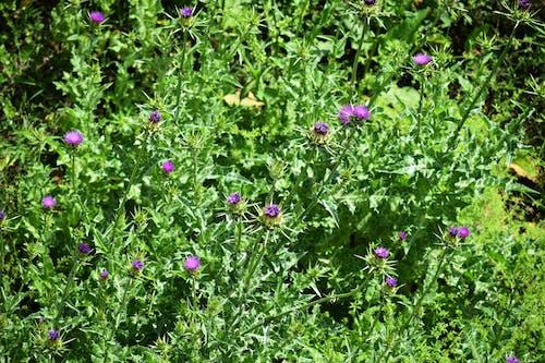 Darmowe zdjęcie z galerii z flora, kwiaty, kwitnąć, lato
