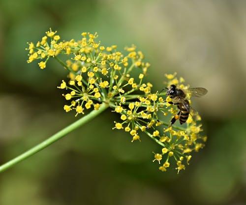 Darmowe zdjęcie z galerii z kwiaty, kwitnąć, lato, motyl