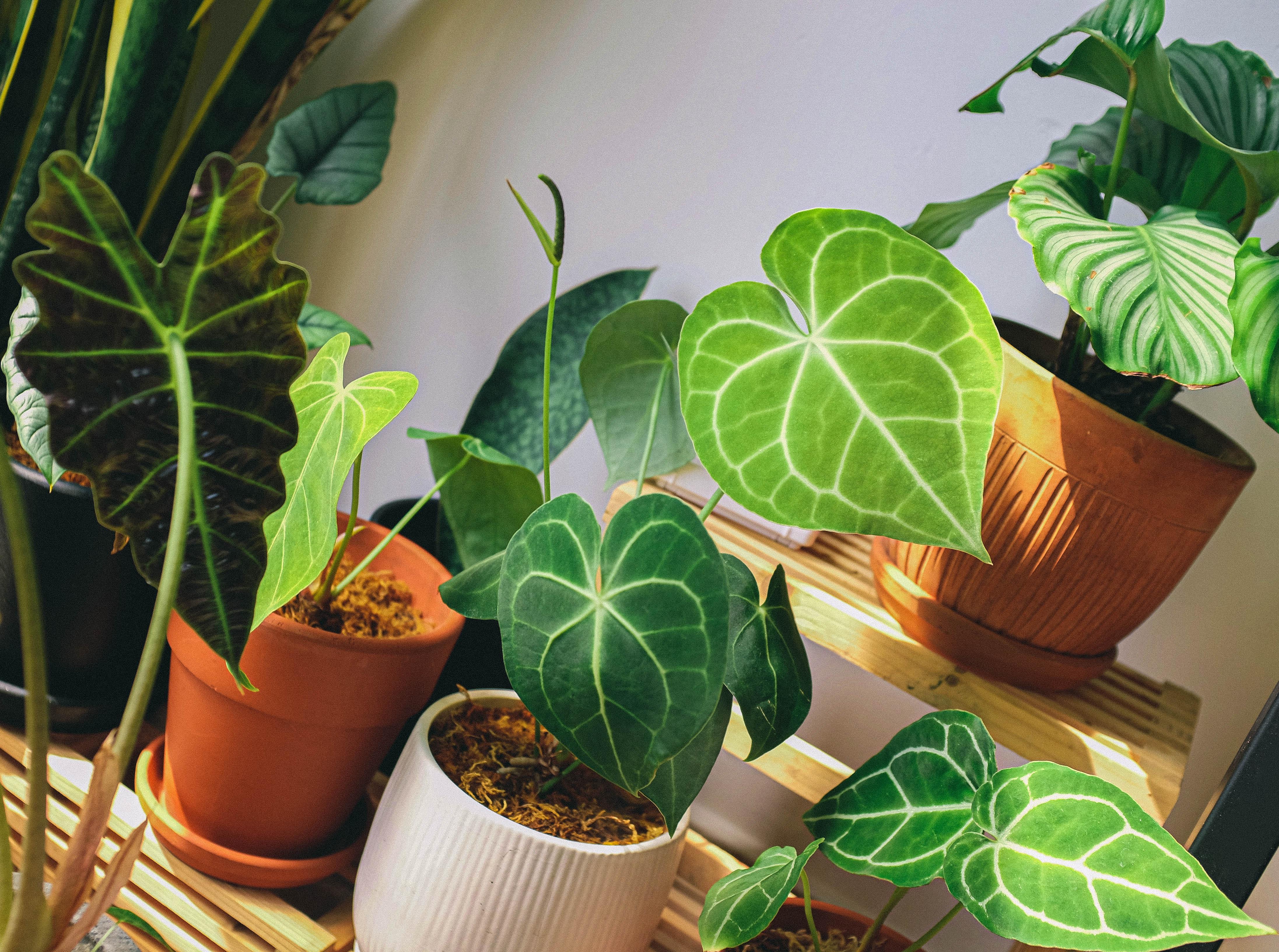 Free stock photo of foliage, houseplant, indoor garden