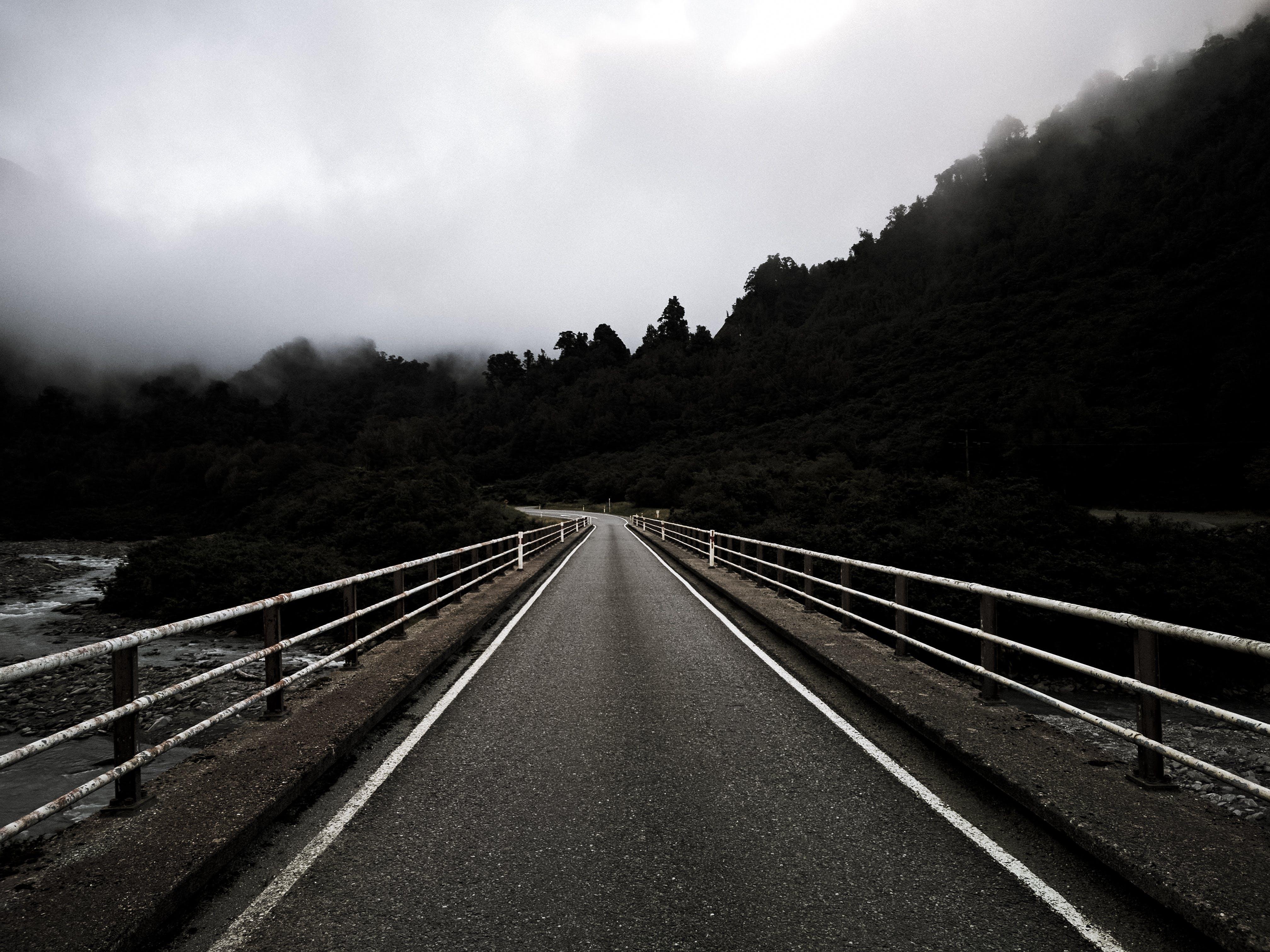 asphalt, foggy, forest