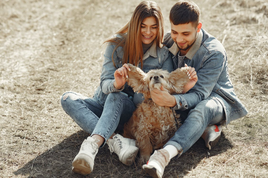 Full length happy couple in jeans outfit playing with adorable American Cocker Spaniel while having fun on lawn in autumn forest