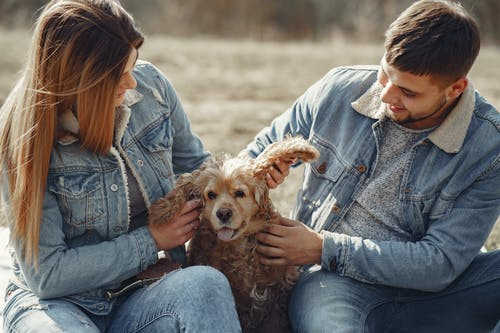 Woman in Blue Denim Jacket Holding Brown Long Coated Dog