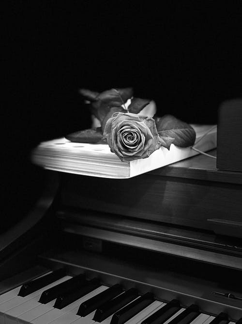 Grayscale Photo Of Rose On Top Of A Book