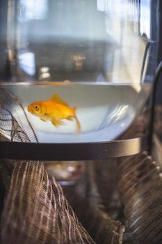 Kostenloses Stock Foto zu licht, wasser, sony, fisch