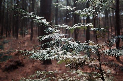Darmowe zdjęcie z galerii z drzewo, las, światło słoneczne