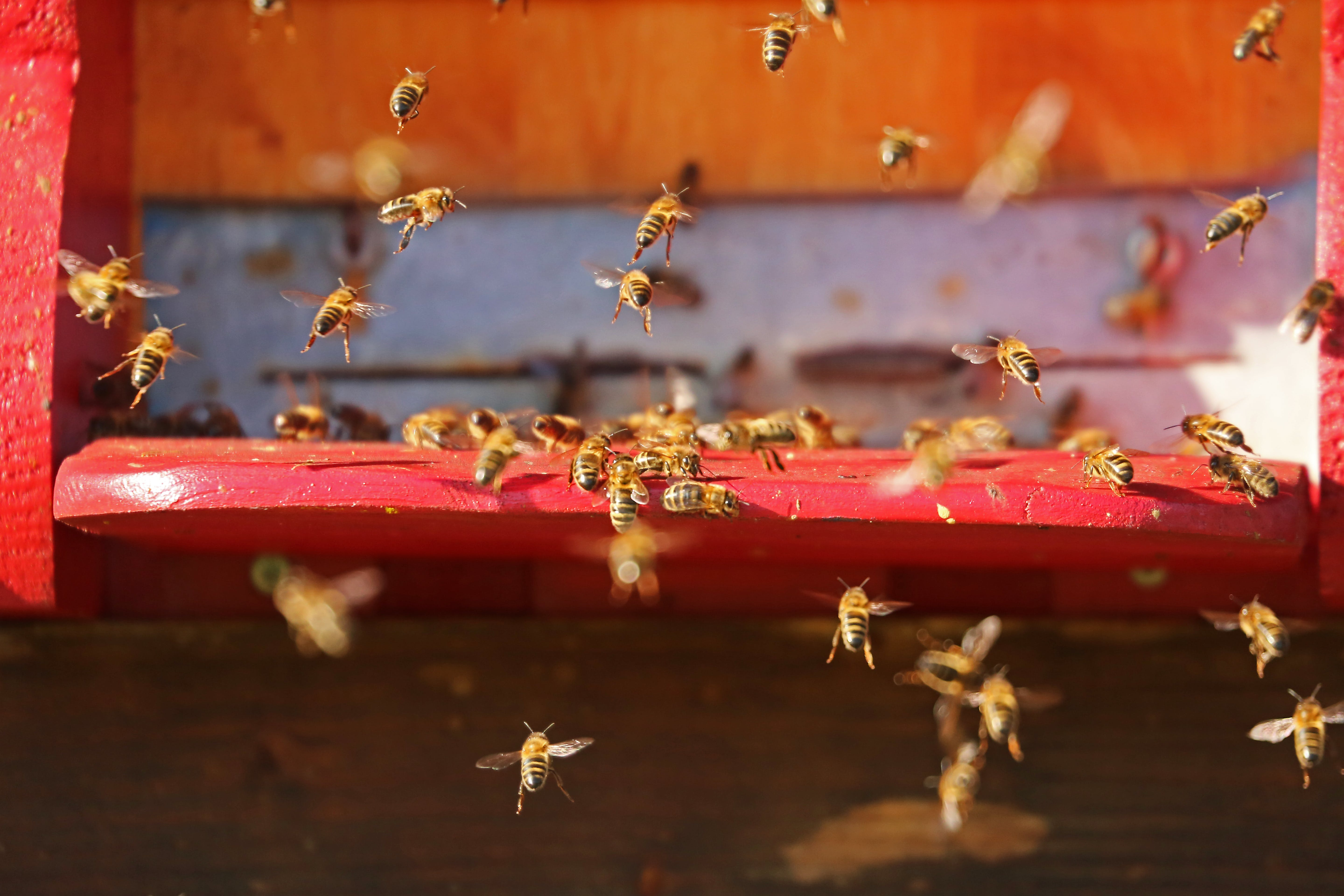 Flying Bees in Close-up Photo