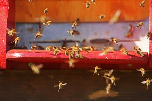 Free stock photo of flying, insect, bees