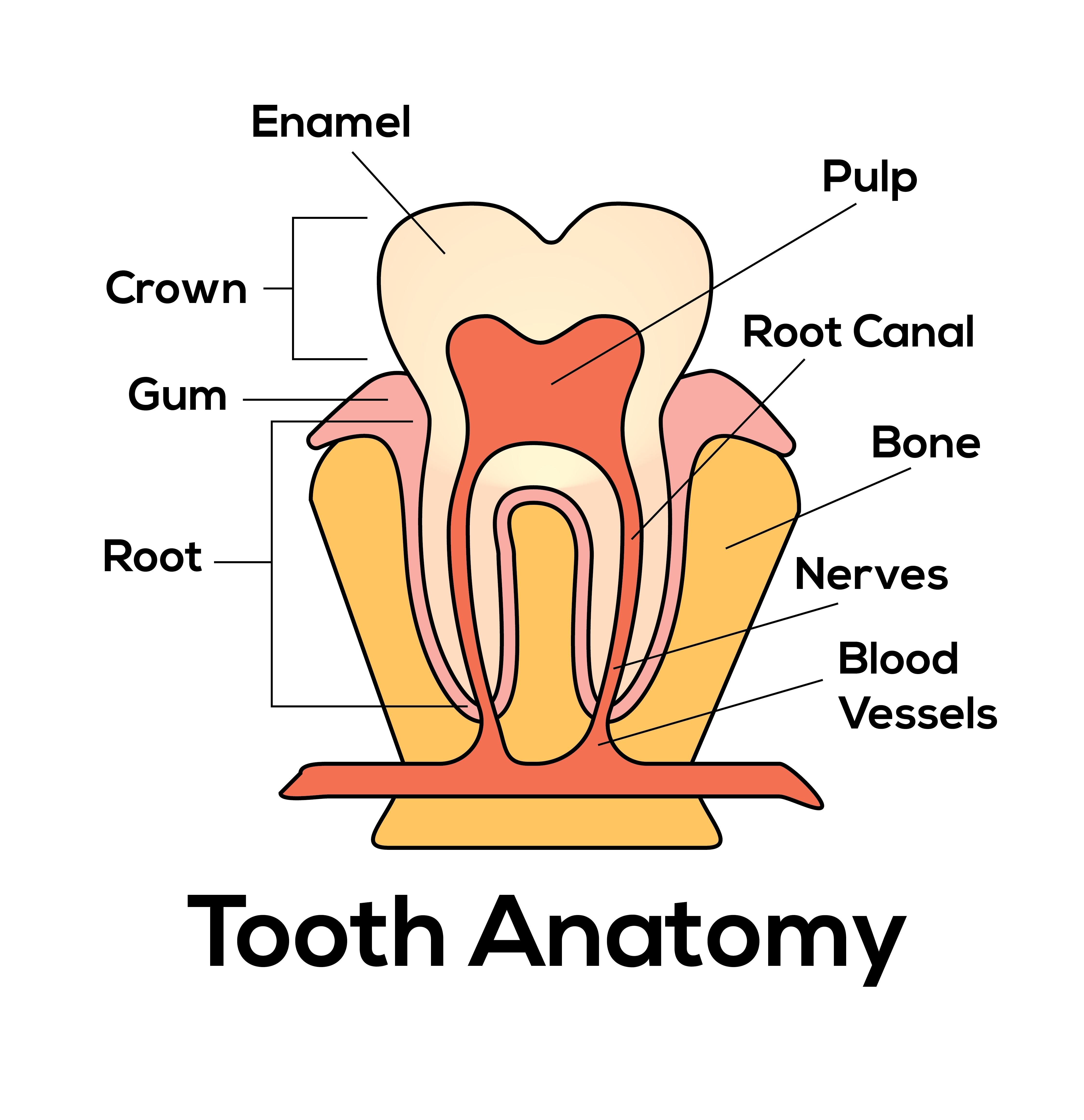 Kostenloses Foto zum Thema: dental, gesundheit, zahn