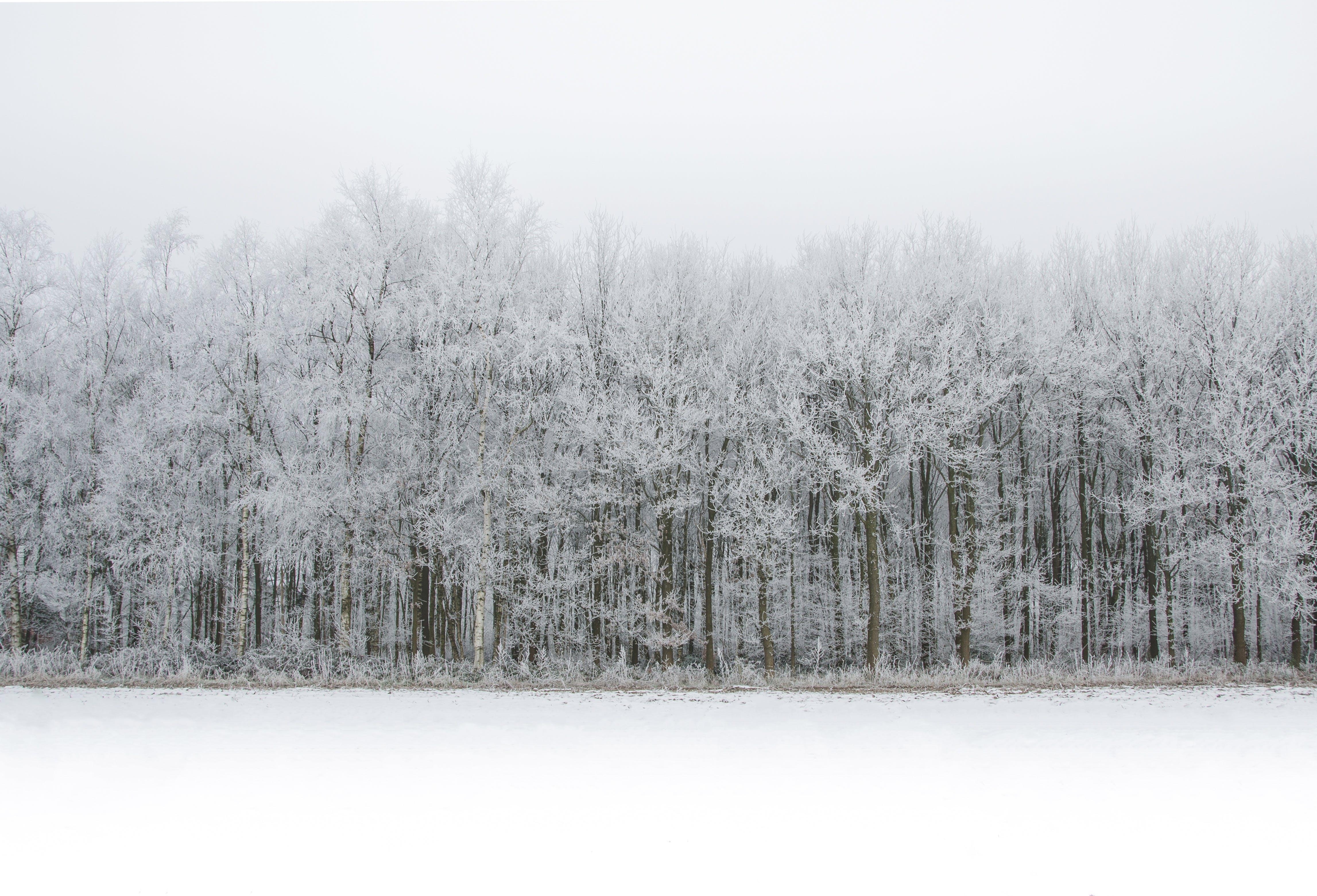 krajina, led, ledový
