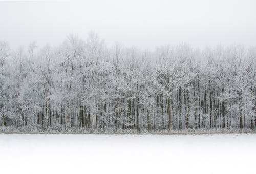 Snow-coated Trees Illustration