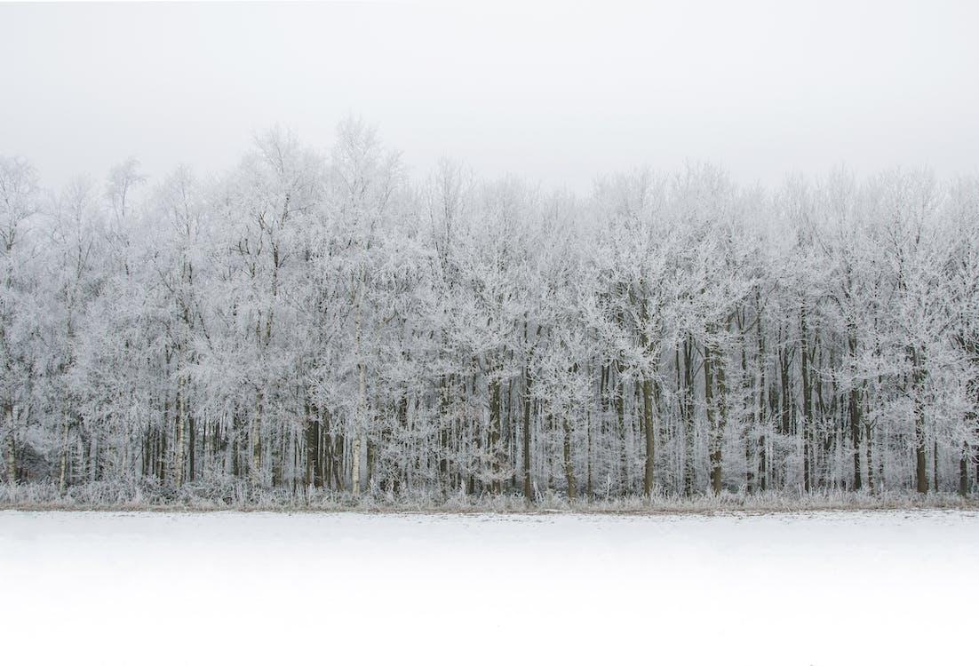 деревья, зима, лед