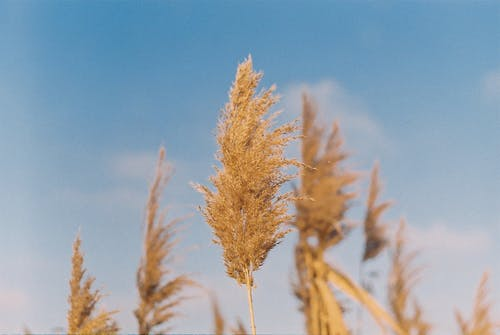 Free stock photo of analog photography, blue sky
