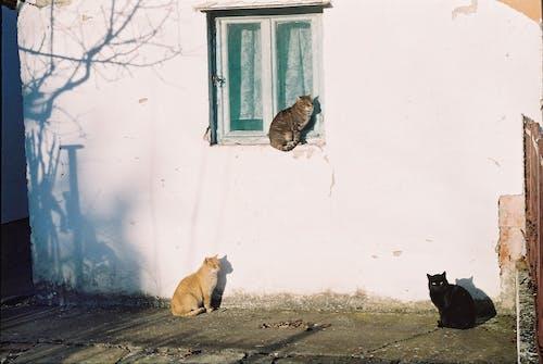 Free stock photo of 14 february, analog photography, cats, nature