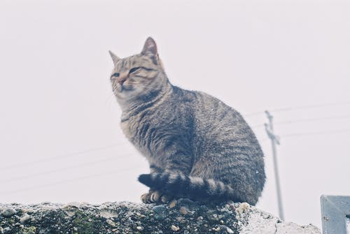 Free stock photo of analog photography, cat, cold weather, foggy day