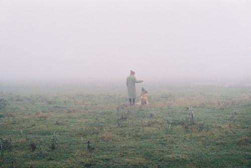 Free stock photo of analog photography, dog, Foggy landscape, frost