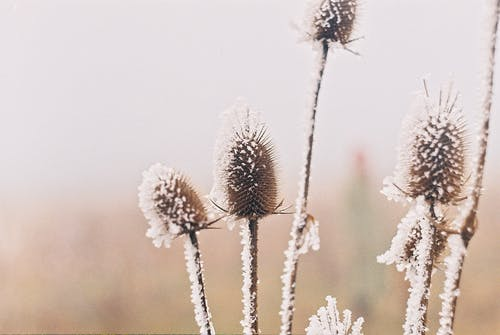Free stock photo of analog photography, Foggy landscape, frost, winter
