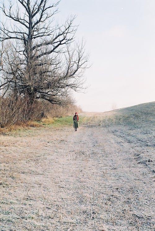 Free stock photo of analog photography, girl, nature, tree